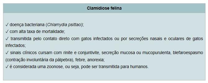 Clamidiose Felina