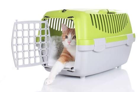 Saiba como acostumar o seu gato na caixa de transporte