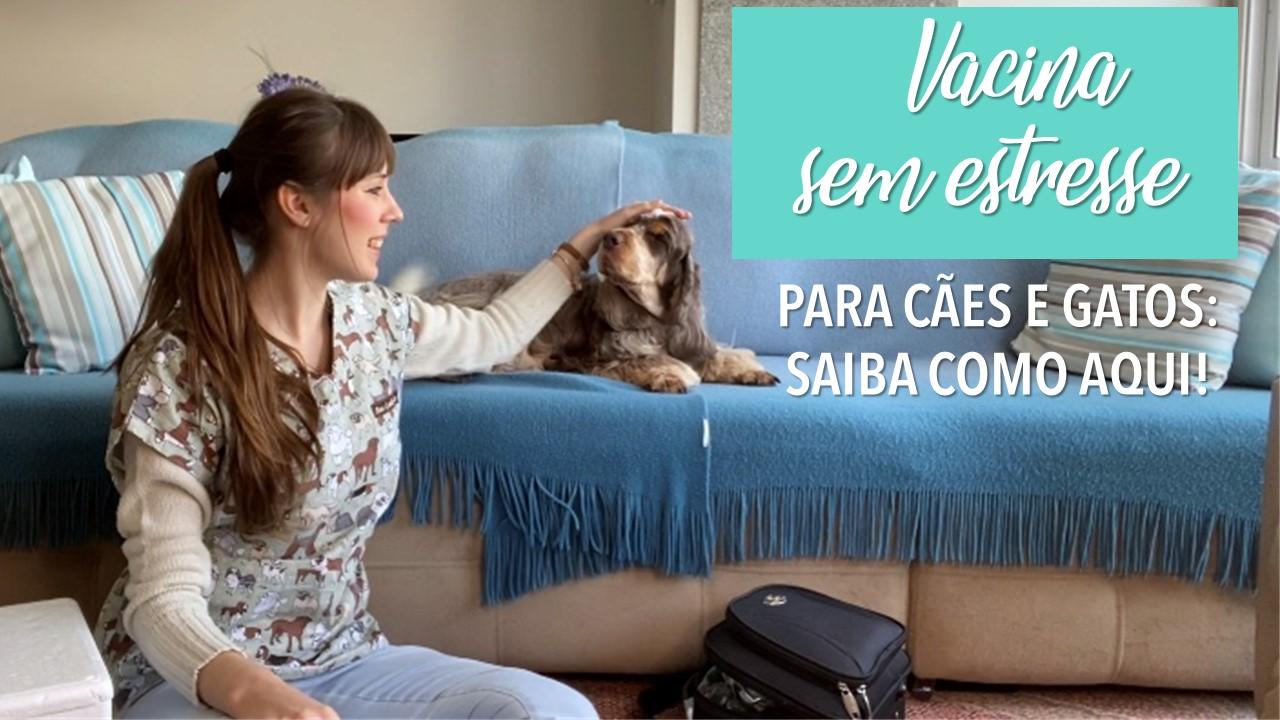 Saiba o que fazer para o seu cão ou gato receber uma vacina sem estresse