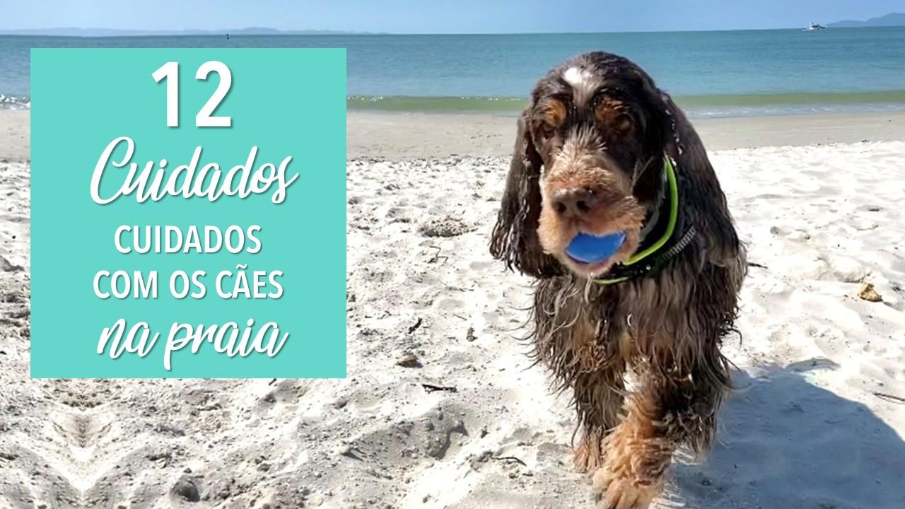 Tenha esses cuidados com os cães na praia e fique livre de qualquer problema